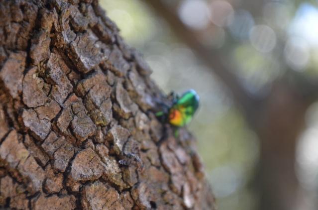 Multi-colored beetle on a tree at Verudela beach, Pula.