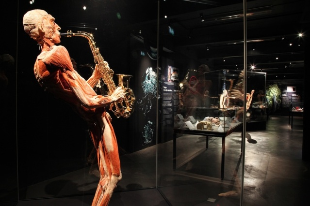 (Image courtesy of Body Worlds, Amsterdam)