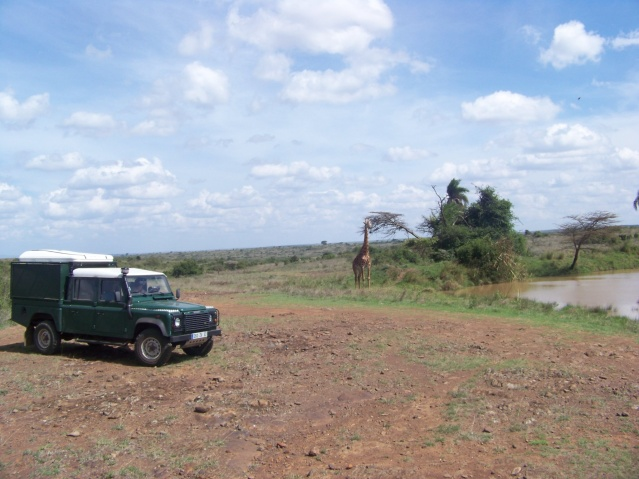 A giraffe at a national park in Kenya