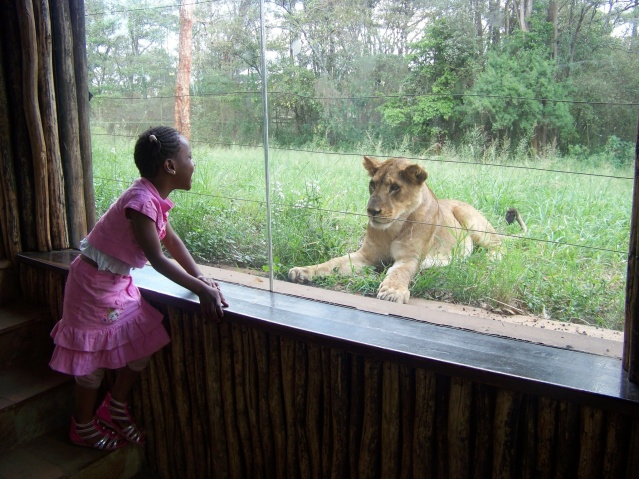 Bonding with a lion cub at Nairobi, Safari Walk.