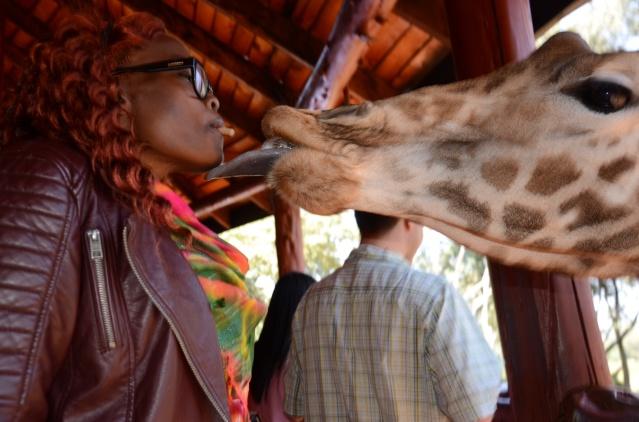 Feeding giraffes at The Giraffe Centre, Hardy. Nairobi