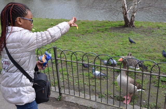 Feeding ducks at St James Park, London.
